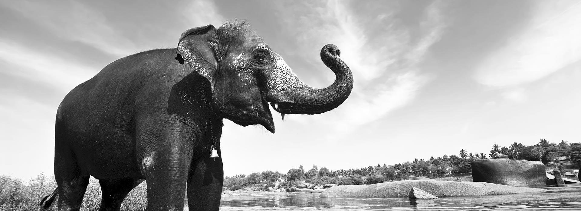 experlift elephant